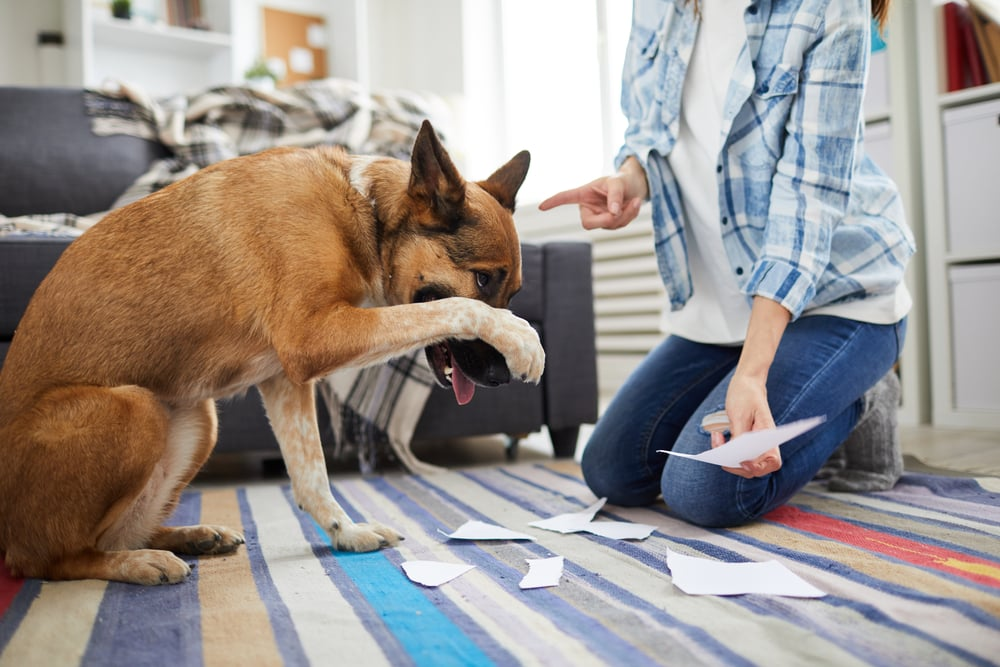 Do dogs Forgive Owners