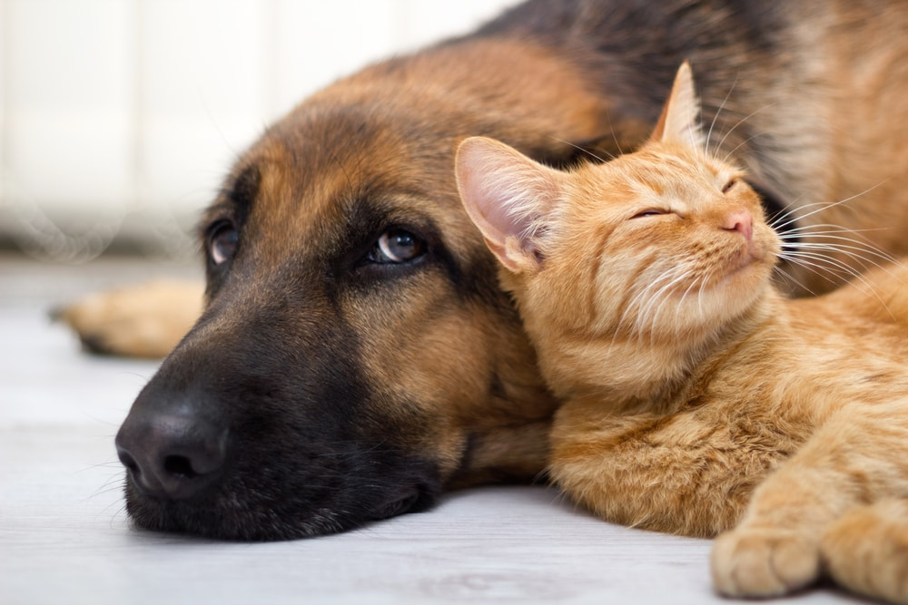 cat and dog introduction