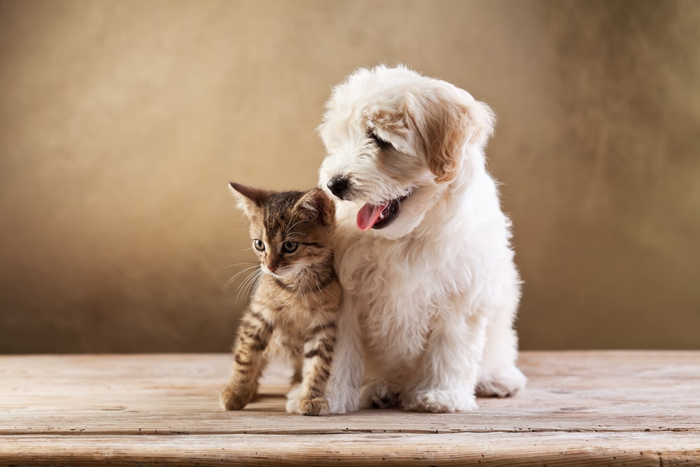 dog and cat breeds