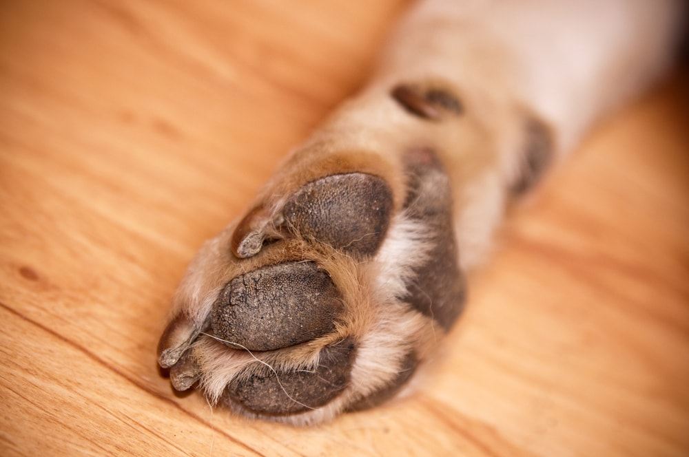 Dogs Who Use Their Paws for Purpose