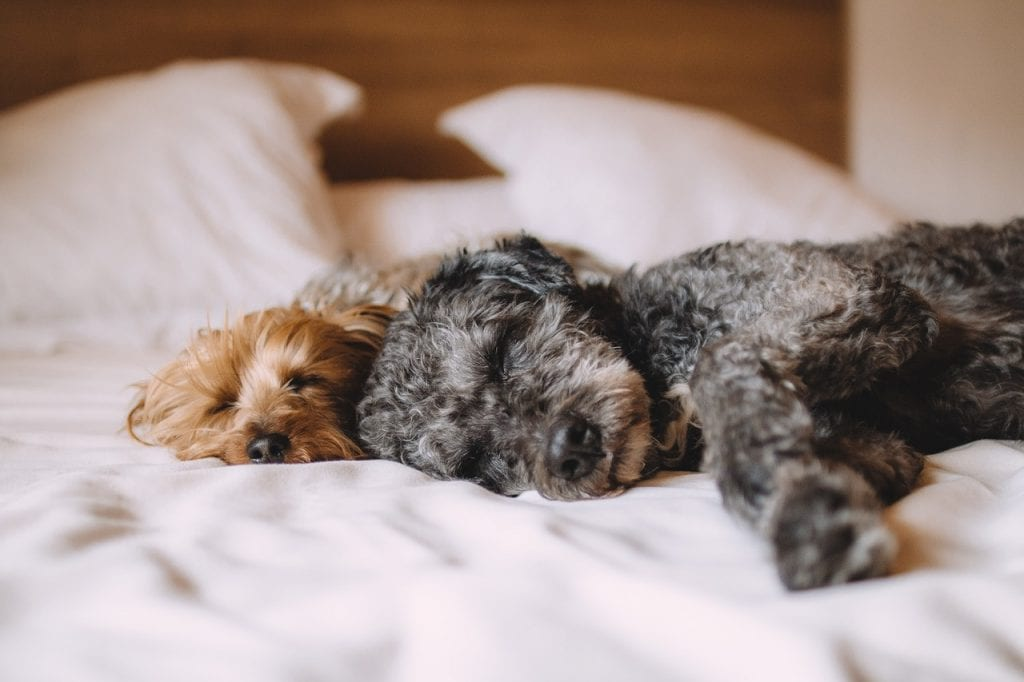Why Do Dogs Wag Their Tails While Sleeping