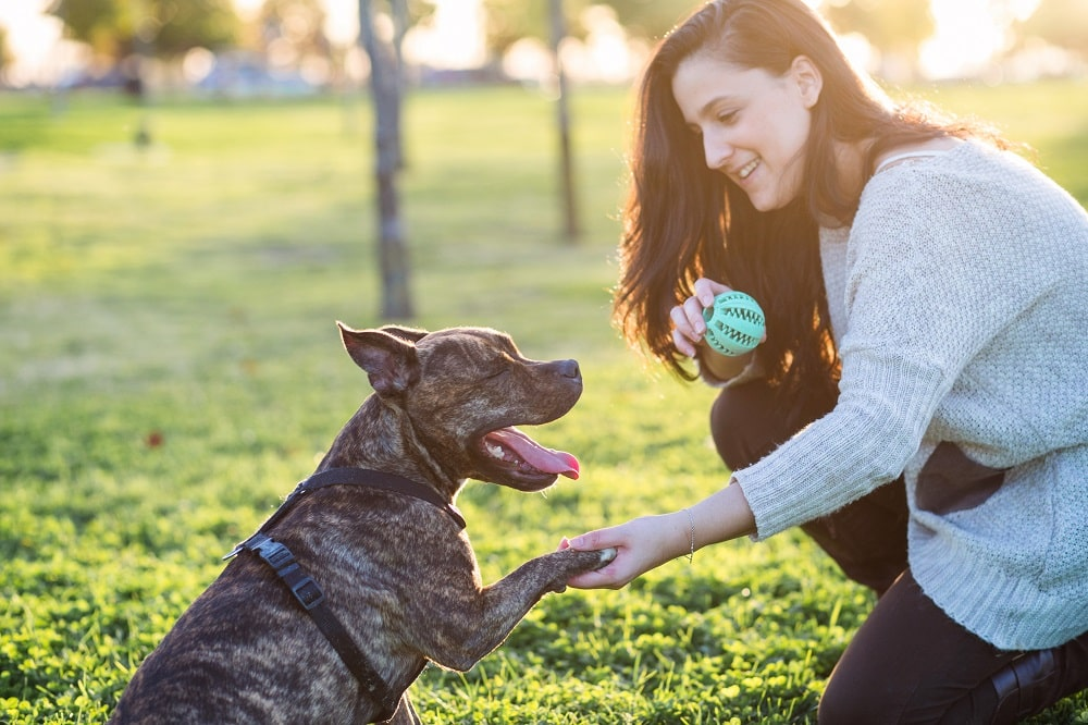 Adding distractions to reinforce dog behavior
