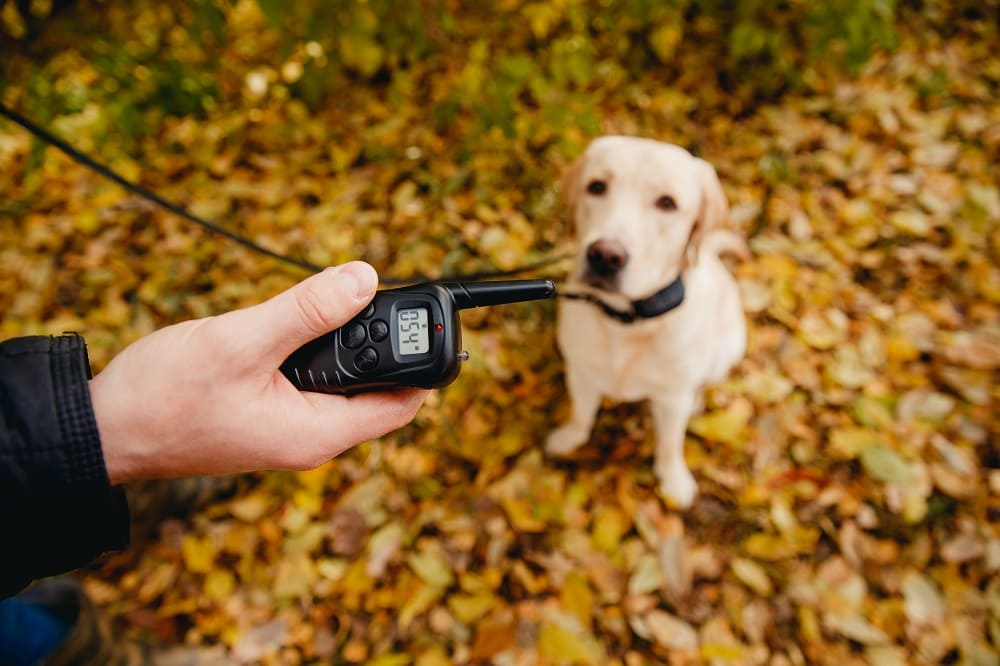 Are Shock Collars an Effective Form of Dog Training