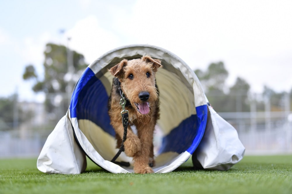 Best Agility Tunnels for Dogs