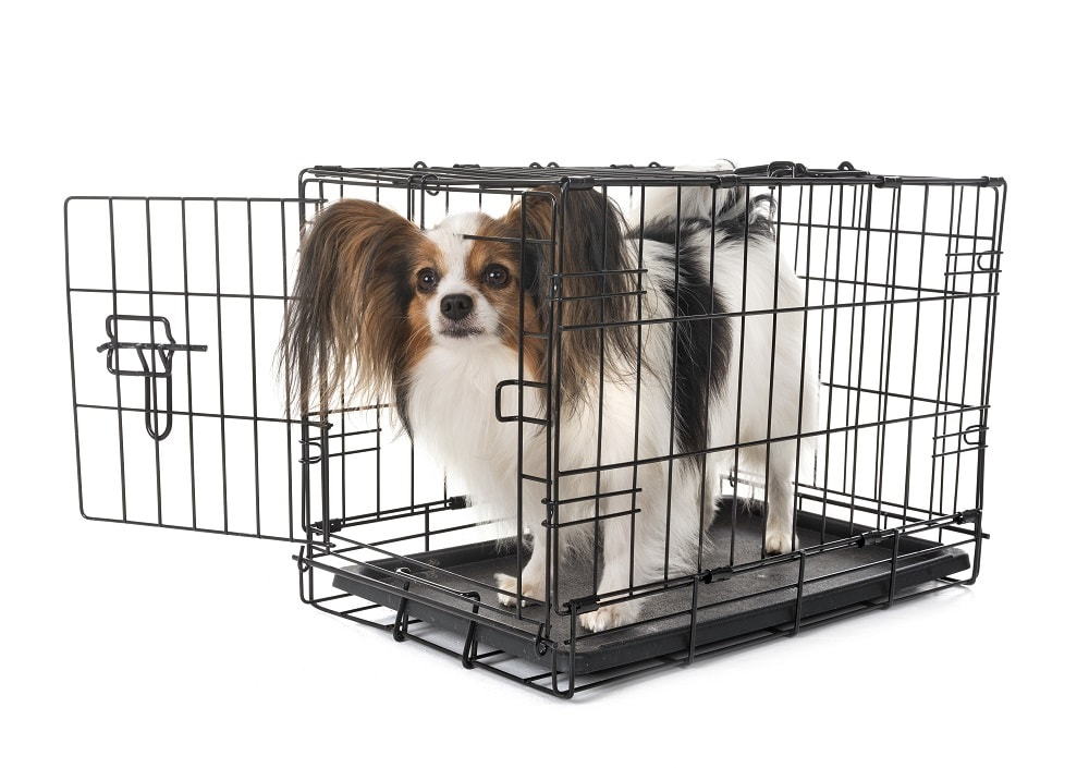 Case for Crate Training