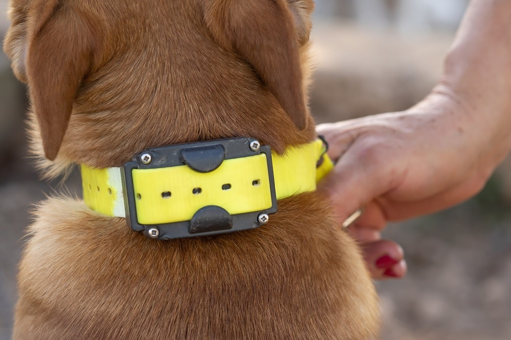 How Often Should You Change Your Dog's Collar