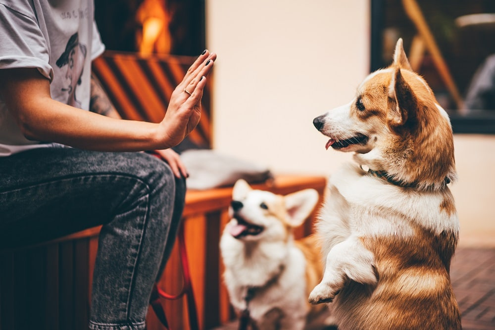 Methods to Stop Bad Dog Behavior