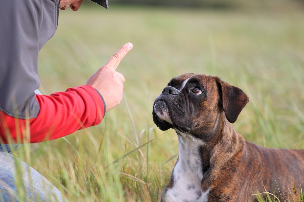 Teaching your Dog how to Stay