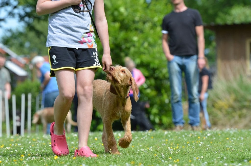 Benefits of Training a Dog to Come