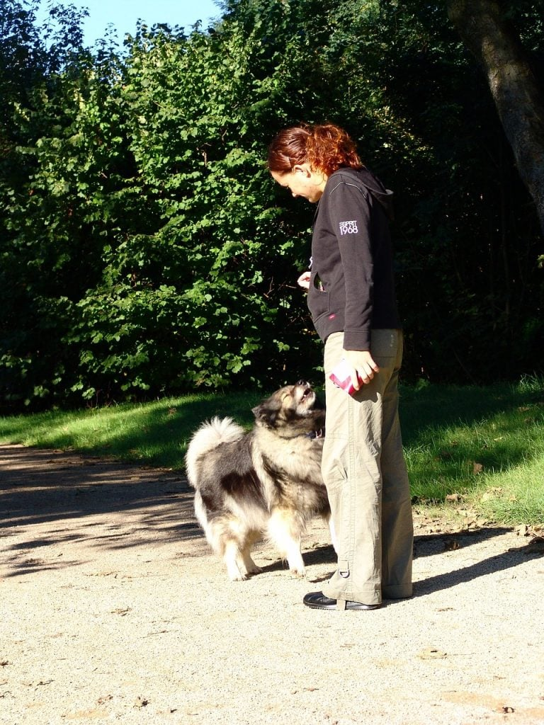 Training a Dog to Come When Called