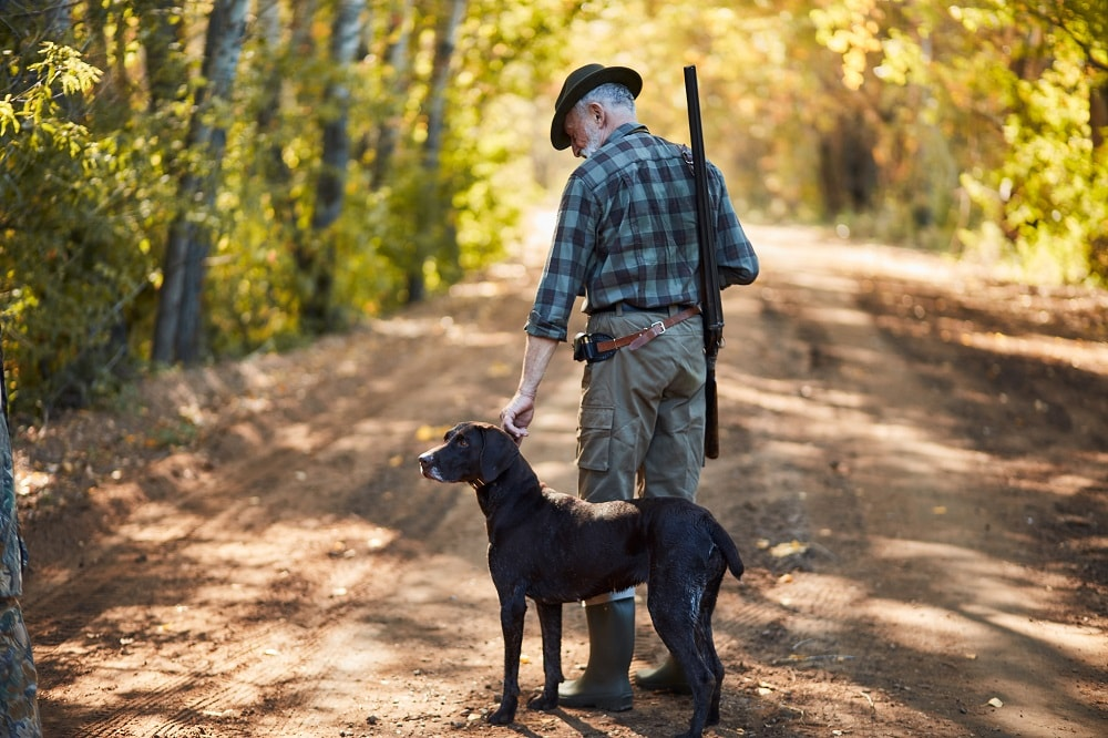 What is the Best Duck Hunting Dog