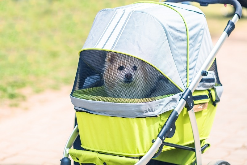 Best Dog Strollers