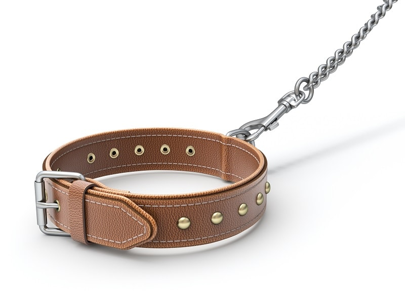 Things to Consider When Buying a Leather Dog Collar