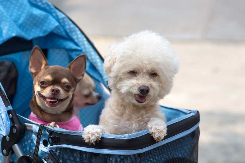 What to Look for When Buying the Best Dog Stroller