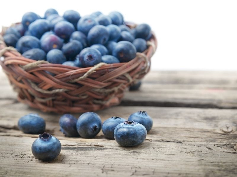 Benefits of Blueberries for Dogs