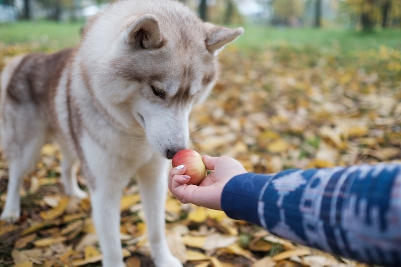 Side Effect of Apples for Dogs