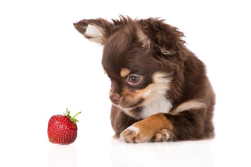 Side Effect of Strawberries for Dogs