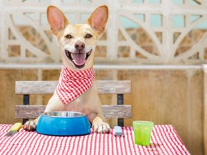 Can Dogs Taste Spicy Food? Do They Like It? - Canine HQ