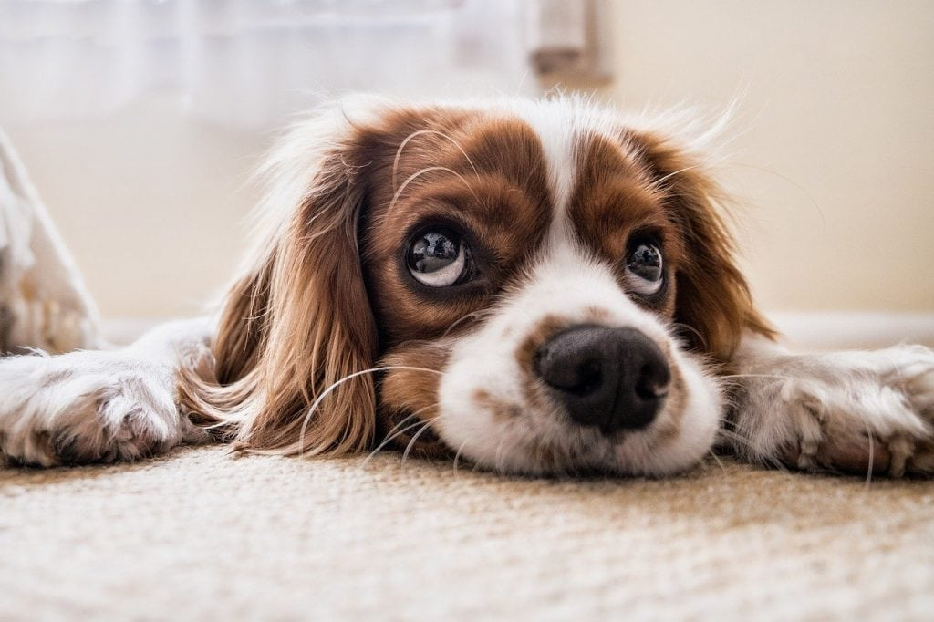 Do Dogs Know When You Ignore Them?