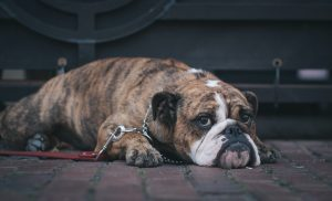 Do Dogs Miss Family Members?