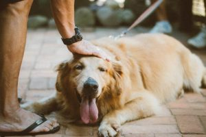 Do Dogs Know if You Accidentally Hurt Them?