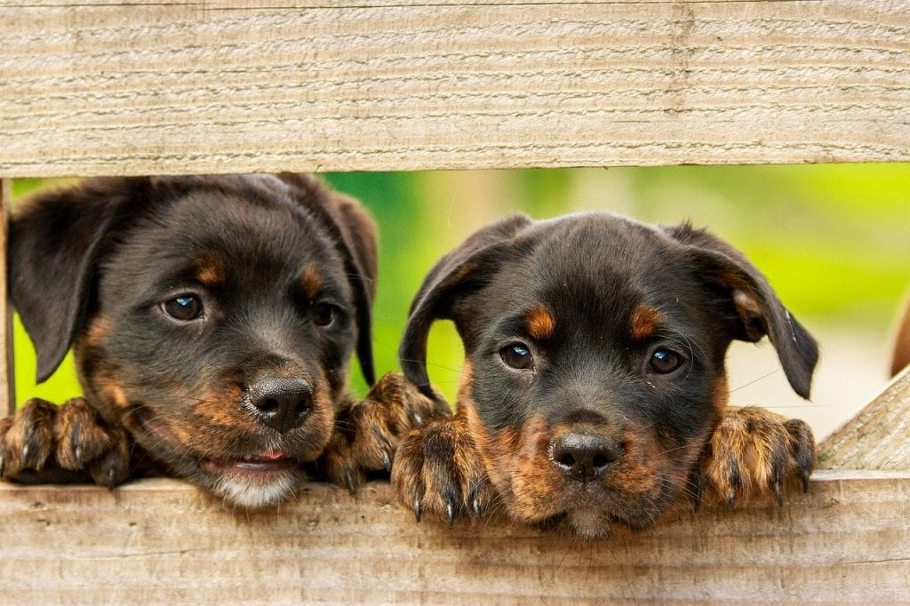 Can Dogs Tell if Another Dog Is a Puppy?