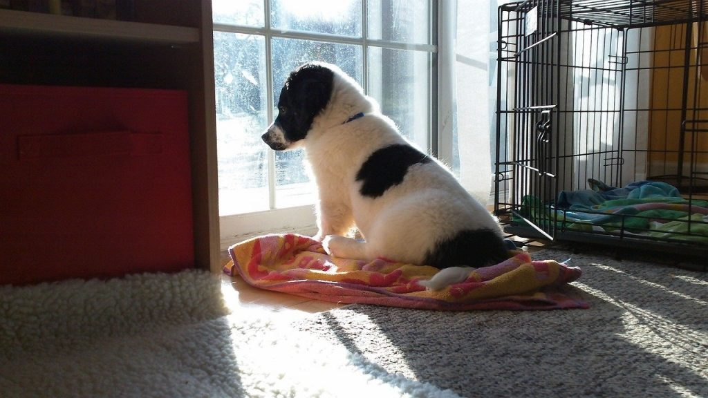 How to Leave a Dog Alone for 12 Hours