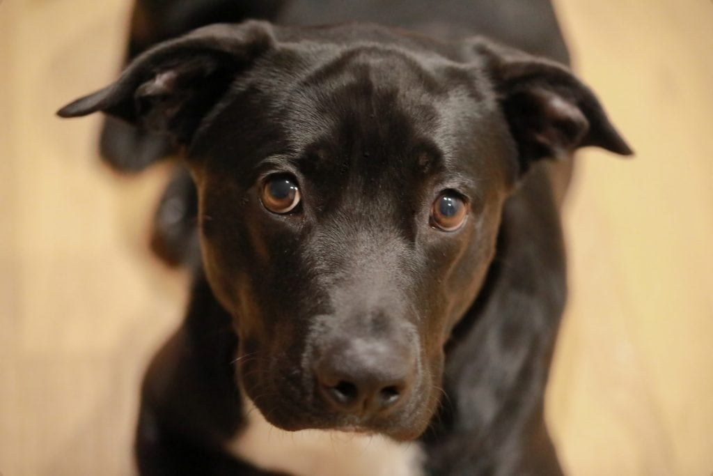 My Dog Has a Microchip from a Previous Owner