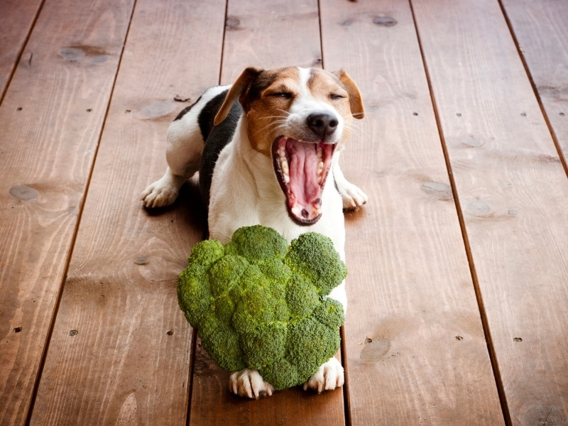 Benefits of Broccoli for Dogs