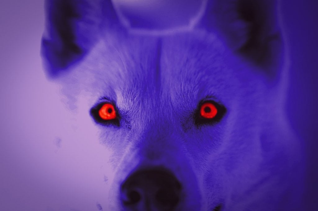 Why Do Dogs' Eyes Glow?