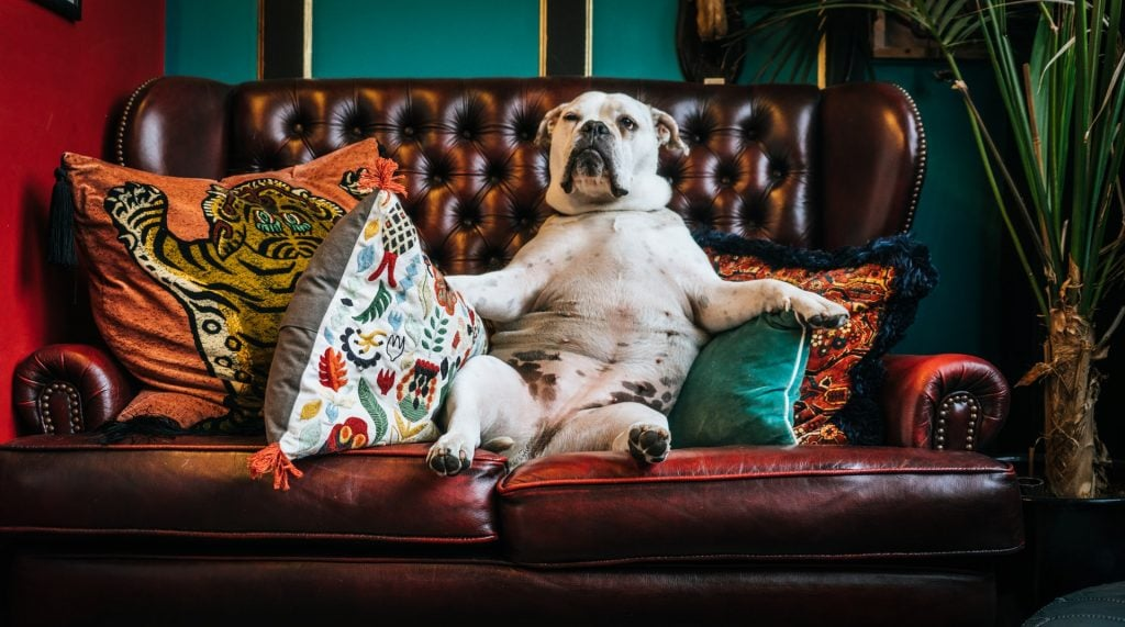 Why Do Dogs Dig on the Couch?