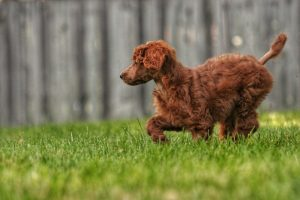 Can Dogs Feel Their Tails?