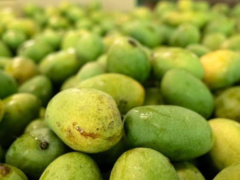Risks of Mango for Dogs
