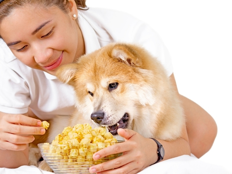 Risks of Popcorn for Dogs