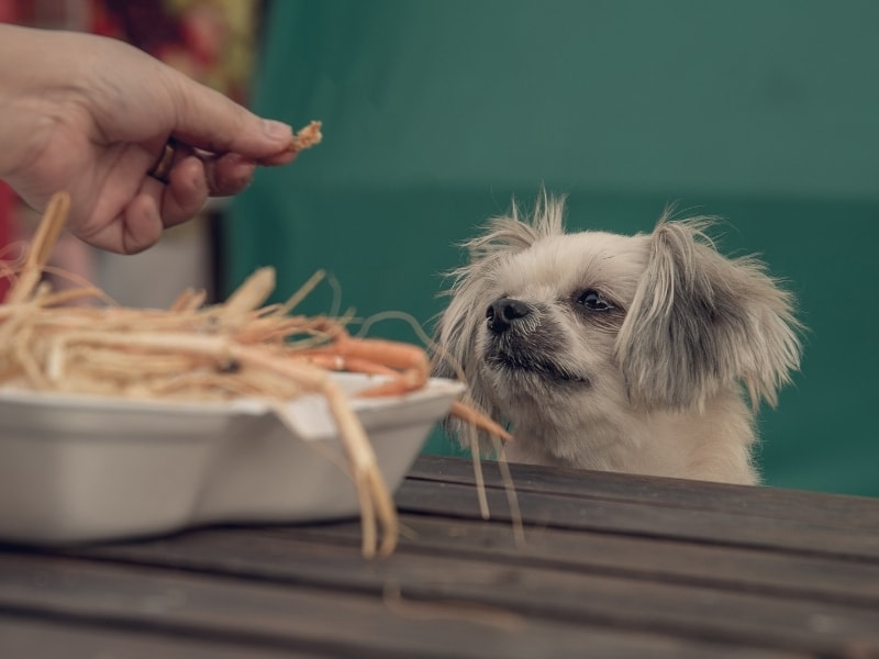 Benefits of Shrimp for Dogs