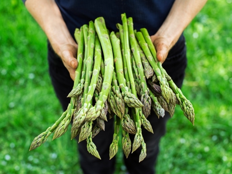 Benefits of Asparagus for Dogs