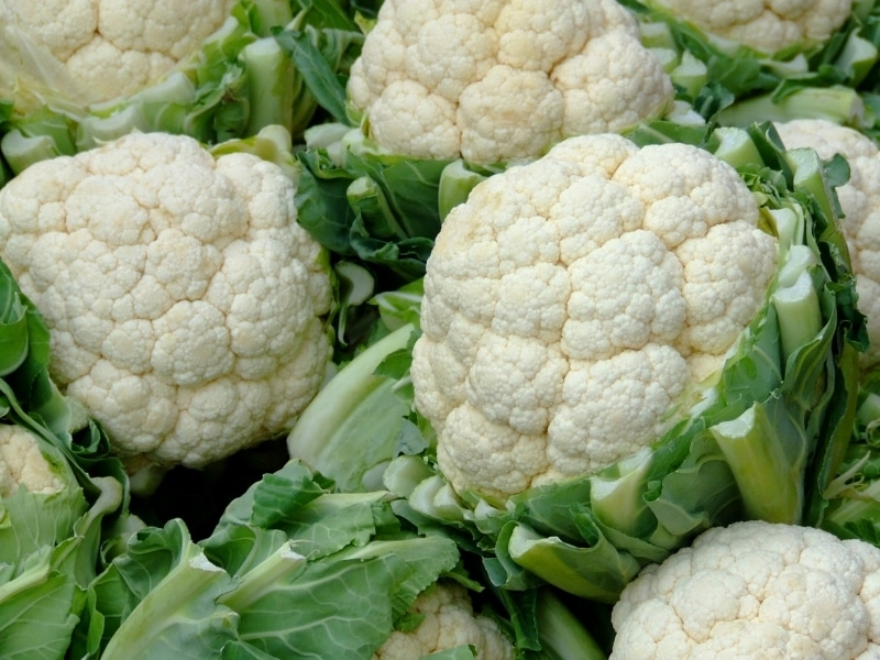 Benefits of Cauliflower for Dogs