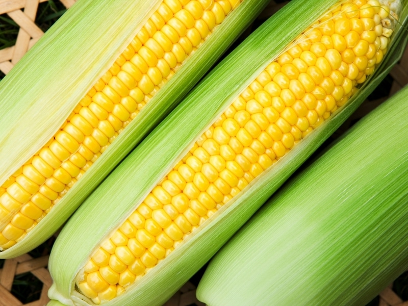 Benefits of Corn for Dogs