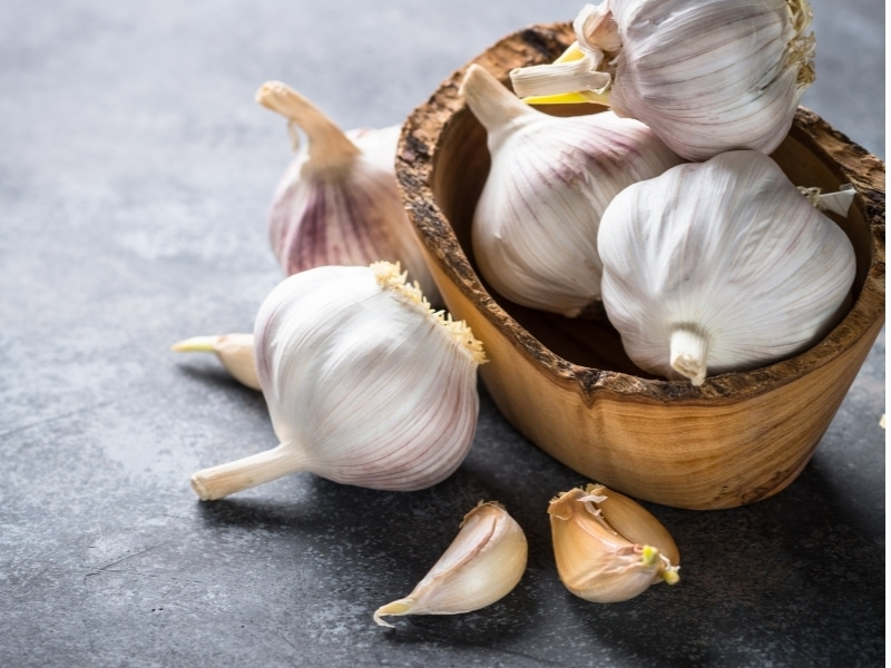 Is Garlic Good for Dogs