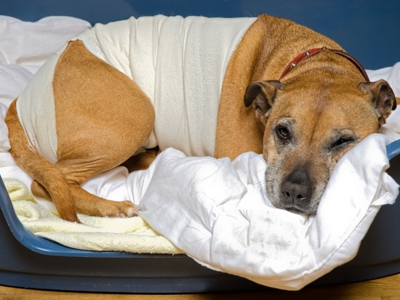 Risks of Walnuts for Dogs