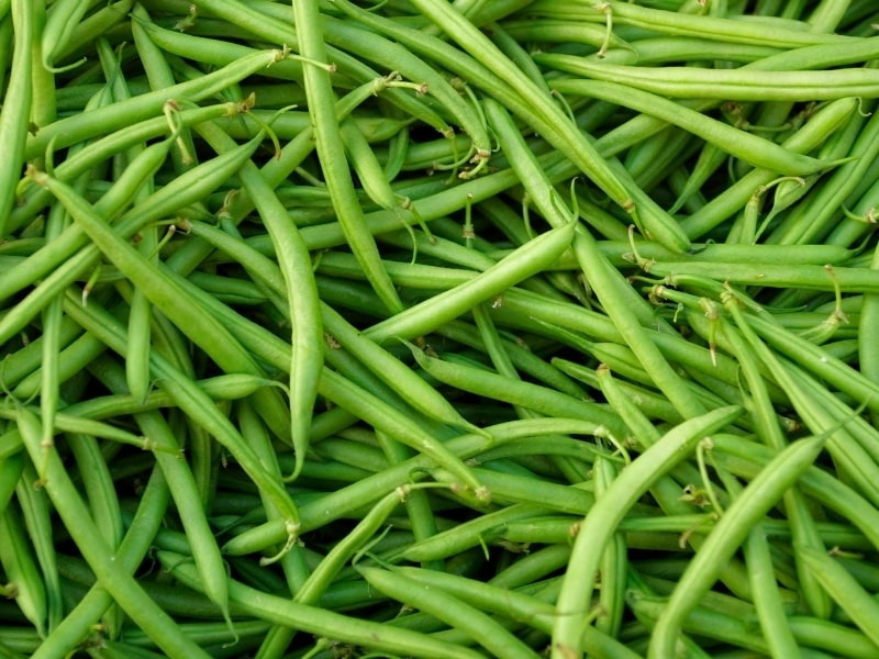 Benefits of Green Beans for Dogs